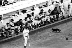 Chicago Cubs (Foto www.lacuevadeloscubs.com)